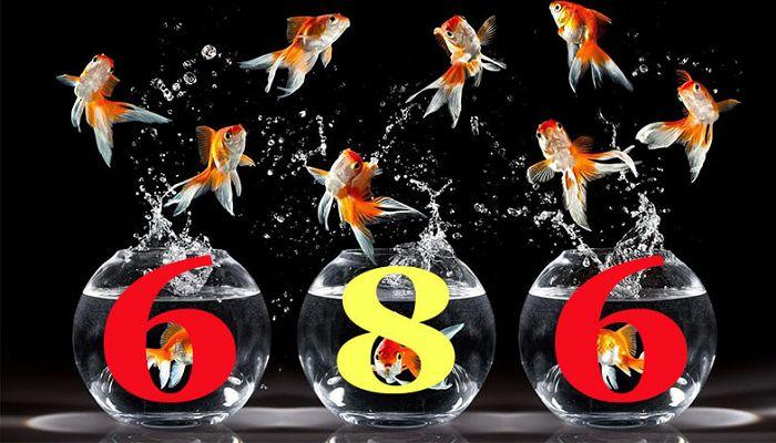Con cá số mấy? Thấy cá đánh đề con gì chuẩn nhất?