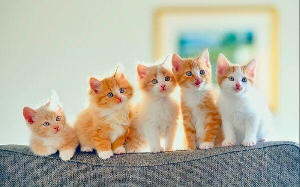 Con mèo là số mấy? Đánh đề số bao nhiêu gì chuẩn nhất