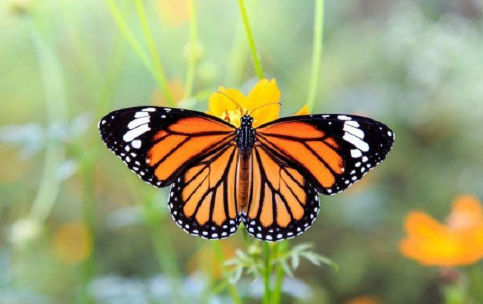 Con bướm số mấy? Khi gặp bướm nên đánh đề con gì? - 188Loto