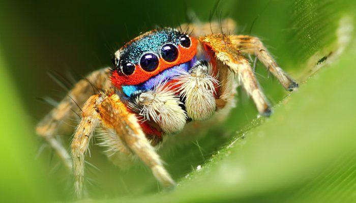 Con nhện số mấy? Đánh đề số bao nhiêu để trúng LỚN