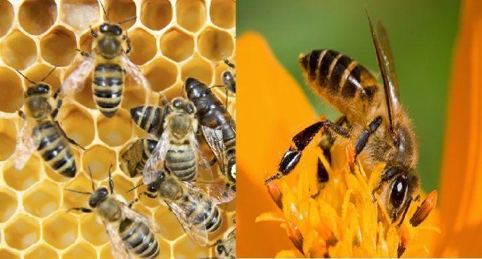Con Ong số mấy? Mơ thấy Ong đánh con gì dễ trúng?