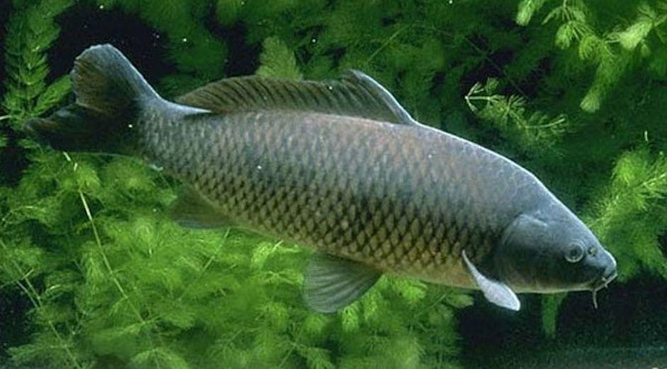 Mơ thấy cá chép đánh con gì? Giải mã điềm báo và con số may mắn