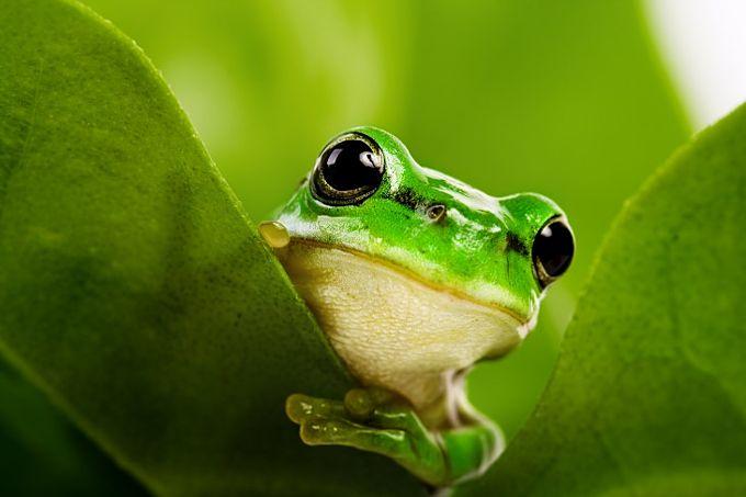 Con ếch số mấy? Nằm Mơ thấy ếch đánh con gì?