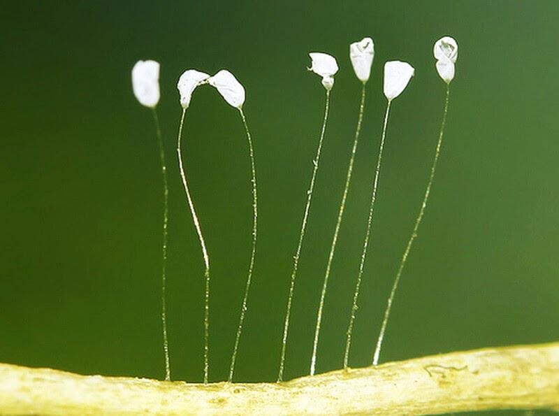 Nhìn thấy hoa ưu đàm đánh con gì trúng lớn?