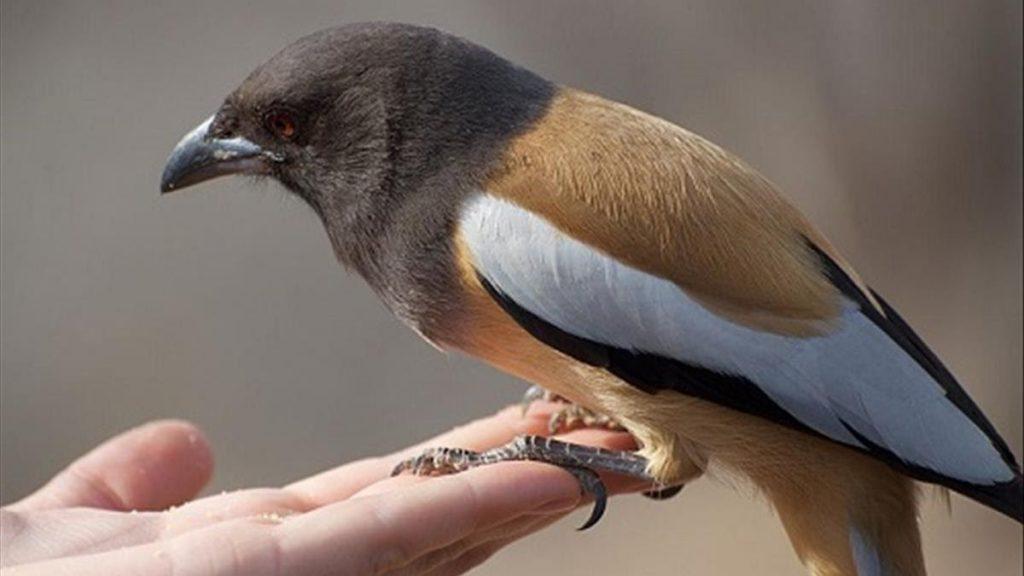 Chim bay vào nhà đánh con gì? Điềm lành hay dữ